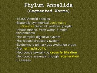 Phylum Annelida (Segmented Worms)