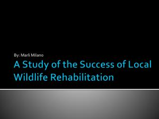 A Study of the Success of Local Wildlife  Rehabilitation