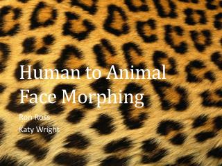 Human to Animal Face Morphing