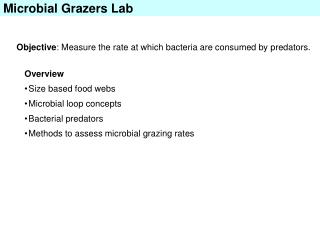 Microbial Grazers Lab