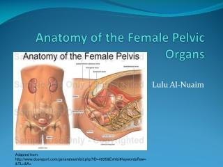 Anatomy of the Female Pelvic Organs