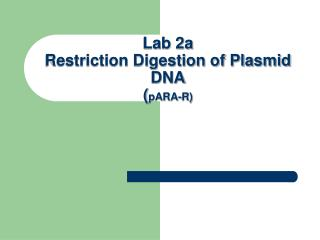 Lab 2a  Restriction Digestion of Plasmid DNA ( pARA-R)