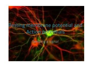 Resting membrane potential and Action potentials