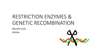 RESTRICTION ENZYMES & GENETIC RECOMBINATION