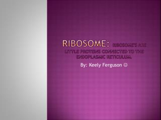 Ribosome:  Ribosome's are little proteins connected to the endoplasmic Reticulum.