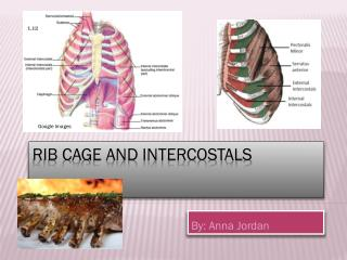 Rib Cage and Intercostals