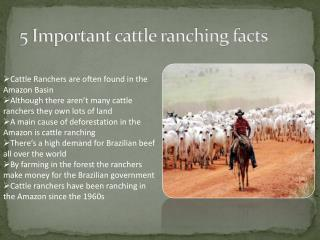 5 Important cattle ranching facts