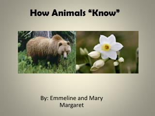 "How Animals ""Know"""