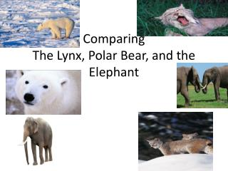 Comparing The Lynx, Polar Bear, and the Elephant