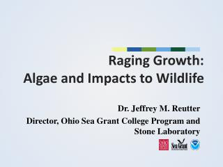 Raging Growth:  Algae and Impacts to Wildlife