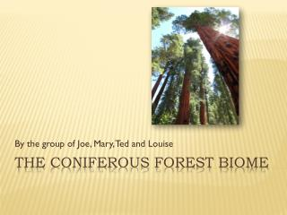 The Coniferous Forest Biome