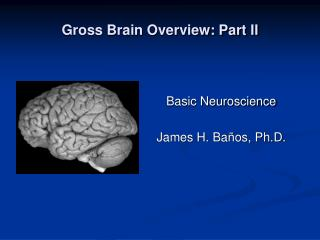 Gross Brain Overview: Part II