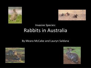 Invasive Species: Rabbits in Australia