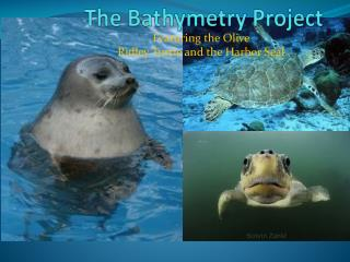The Bathymetry Project