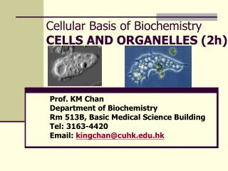 Cellular Basis of Biochemistry CELLS AND ORGANELLES (2h)