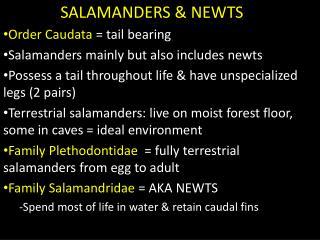 SALAMANDERS & NEWTS