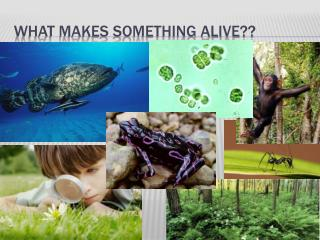 What makes something Alive??