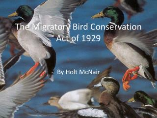 The Migratory Bird Conservation Act of 1929