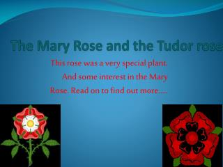 The Mary Rose and the Tudor rose