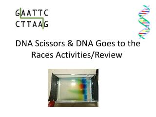 DNA Scissors & DNA Goes to the Races Activities/Review