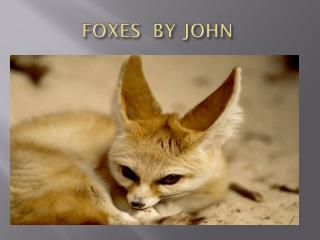 FOXES  BY JOHN