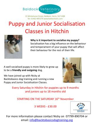 Puppy and Junior Socialisation Classes in  Hitchin