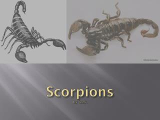 Scorpions by  izzy .