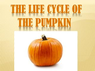 The Life Cycle of                     	the Pumpkin