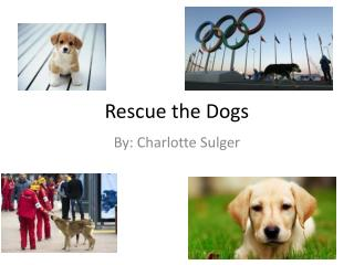 Rescue the Dogs