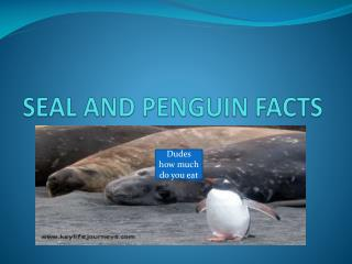 SEAL AND PENGUIN FACTS