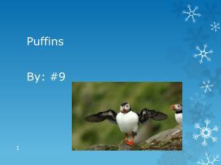 Habitat puffins lire horth