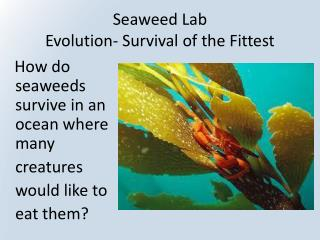 Seaweed Lab Evolution- Survival of the Fittest