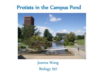 Protists  in the Campus Pond