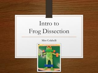 Intro to  Frog Dissection