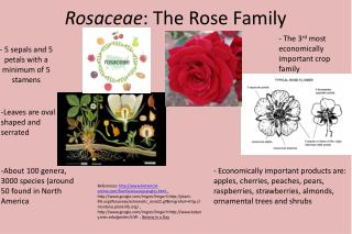 Rosaceae : The Rose Family