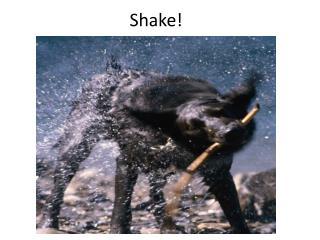 Shake!