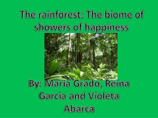 The rainforest: The biome of showers of happiness
