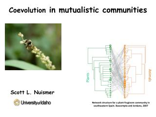 Coevolution  in  mutualistic  communities