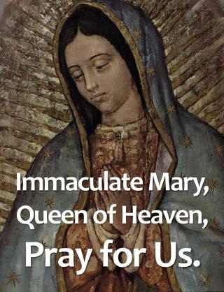 Immaculate Mary,  Queen of Heaven, Pray for Us.