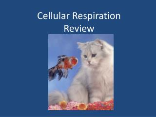 Cellular Respiration Review