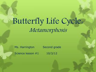 Butterfly Life Cycle: Metamorphosis