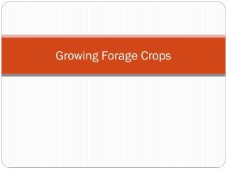 Growing Forage Crops