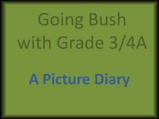 Going Bush with Grade 3/4A