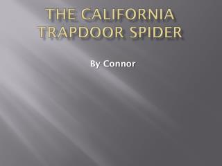 The California Trapdoor spider