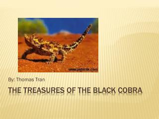 The treasures of the Black Cobra