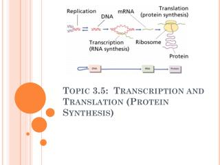 Topic 3.5:  Transcription and Translation (Protein Synthesis)