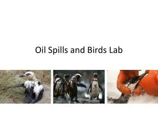 Oil Spills and Birds Lab