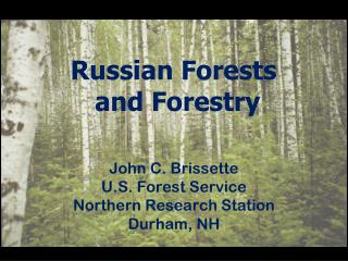 Russian Forests  and Forestry