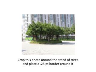 Crop this photo around the stand of trees and place a .25 pt border around it