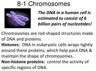 8-1 Chromosomes